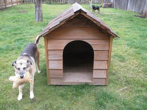 photograph enhancement or the dog house